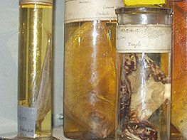 Darwin Centre specimens from HMS Beagle